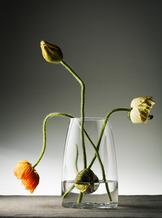 Bruk Vase/Jar Clear Lid