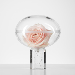 Rose Hiding Clear